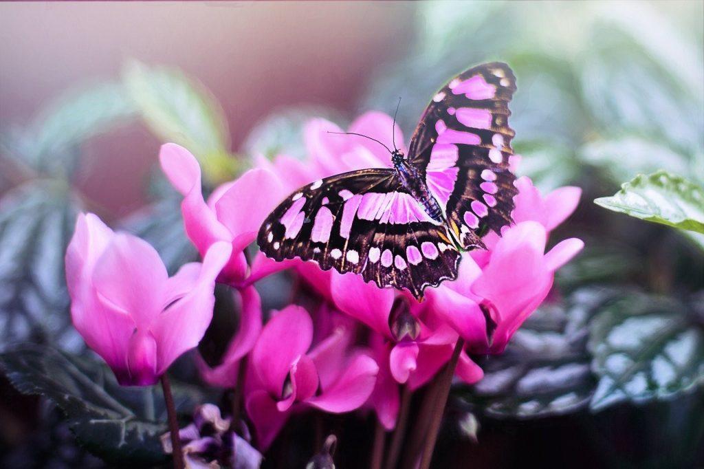 Roze vlinder op bloemen