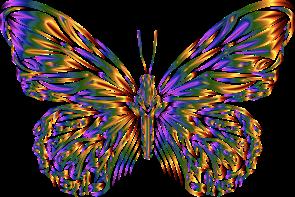 Vlinder kleurrijk